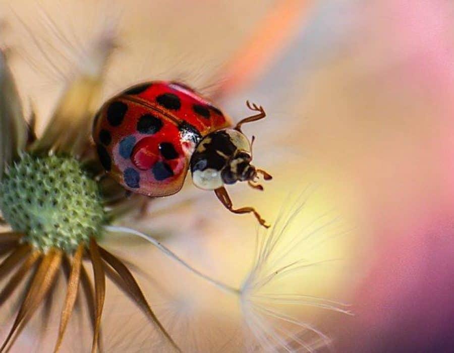 Proiect V – Cu lupa printre insecte / 3 sedinte ( 22 martie – 5 aprilie 2017)