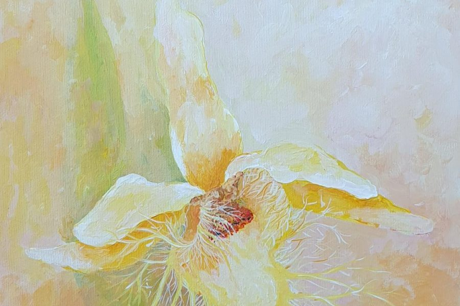 Orhidee II